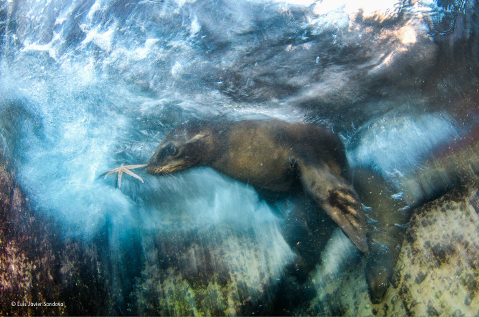 luis-javier-sandoval_wildlife-photographer-of-the-year_-impressions-winner