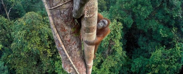 tim-laman-wildlife-photographer-of-the-year-grand-title-winner_1024